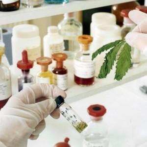 Cdm dà via libera alla legge abruzzese sulla cannabis terapeutica. Anche Giovanardi d'accordo