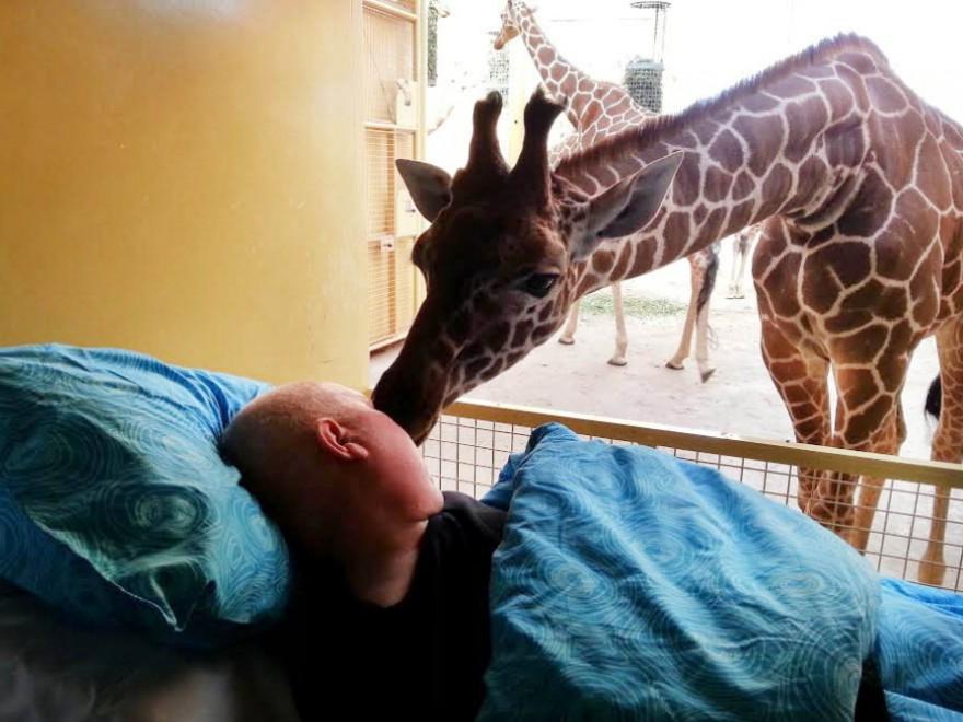 Rotterdam, il bacio d'addio della giraffa al suo custode
