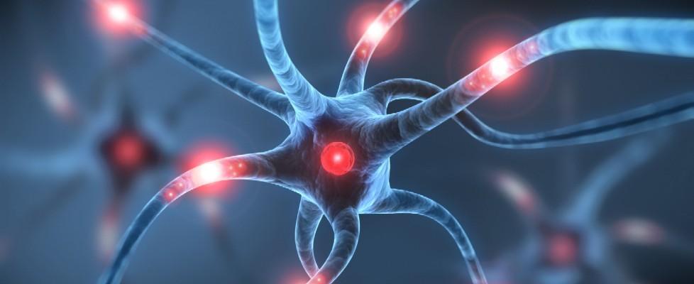 Identificati i neuroni che codificano i ricordi
