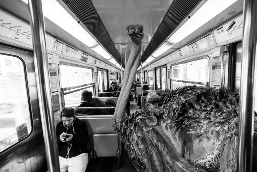 Animali urbani e surreali: a Parigi la savana è nel metrò