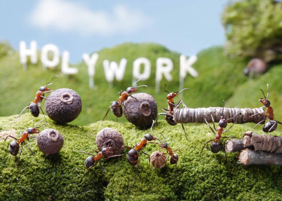 Il palcoscenico del mondo delle formiche incontri al for Debellare formiche
