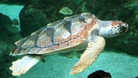 Sos tartarughe: 200 mila a rischio ogni anno