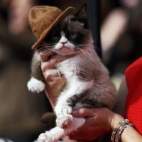 Grumpy Cat sfila sul red carpet degli Mtv Music Award
