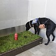 Bagno indoor per cani all'aeroporto di Detroit