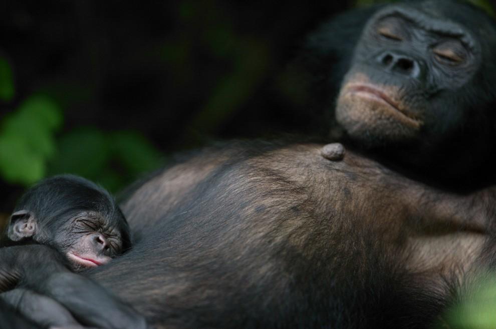 buonanotte e sogni d oro  quanto dormono gli animali can clipart can clipart be used commercially