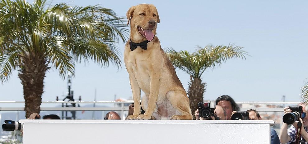 Cannes, gli attori cani vincono sempre: è il momento della Palm Dog. E il vincitore è...