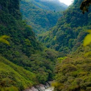 """Wwf lancia l'allarme: """"Foresta amazzonica a rischio per uso improprio soia"""""""