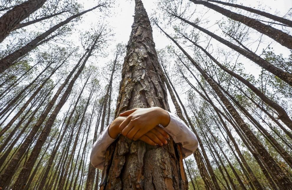 Abbraccio record agli alberi: in 2mila per la giornata mondiale dell'Ambiente