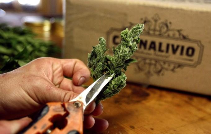 Cannabis terapeutica, in Italia è ancora un diritto negato