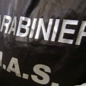 Carne bovina infetta e venduta come pregiata, sequestri dei Nas in tutta Italia