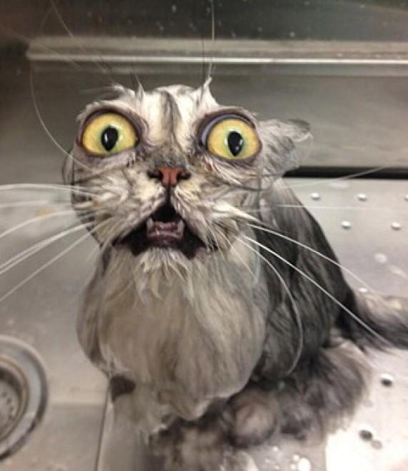 Conosciuto Espressione da gatto: la classifica delle più buffe - Repubblica.it UX41