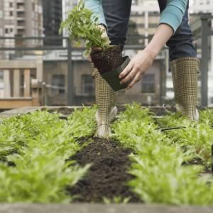 Materiali, la nuova bioplastica verrà dai pomodori