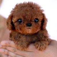 Il cucciolo sembra un peluche: ecco i più belli del web