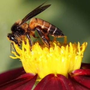 Usa, una task force per proteggere le api