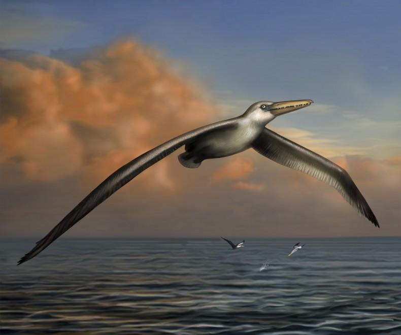 Aveva un'apertura alare di 7 metri: scoperto il più grande volatile di sempre