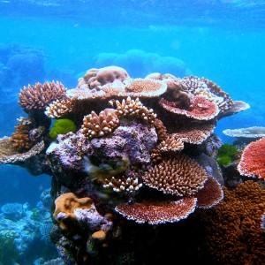 Best Before 2034 I Coralli Dei Caraibi Hanno La Data Di