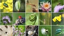 Biodiversità, Italia al top ma alto rischio estinzione