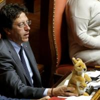 """Senato, in aula spunta un canguro di peluche. Grasso: """"Pupazzi non ammessi"""""""