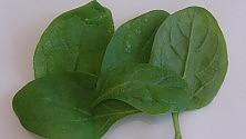 Foglie di spinaci e laser per scoprire la fotosintesi