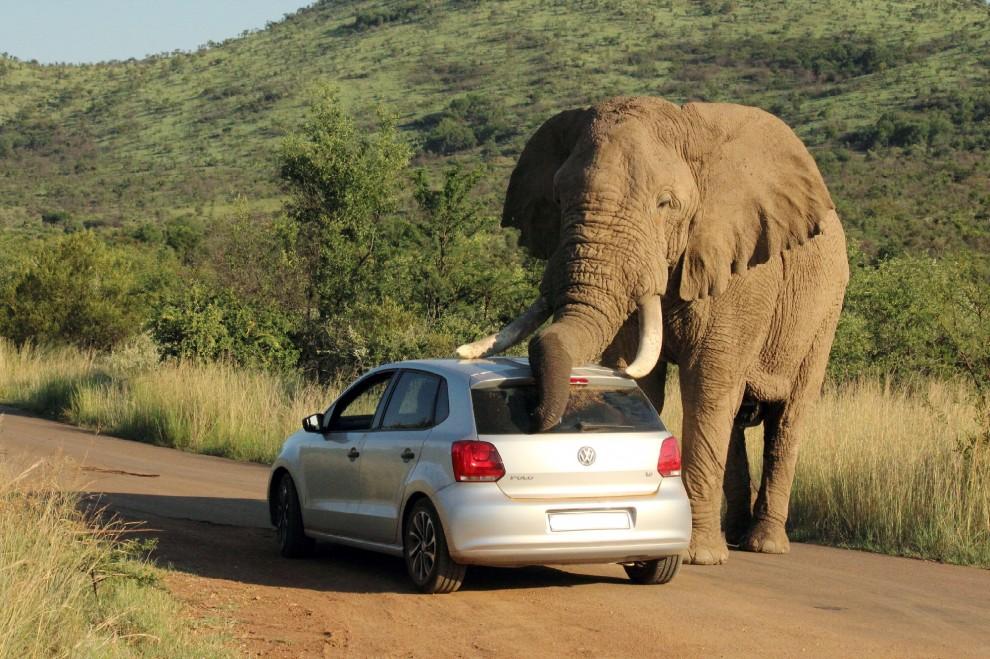 Sudafrica l 39 elefante stanco e si riposa dove gli pare for Sud africa immagini