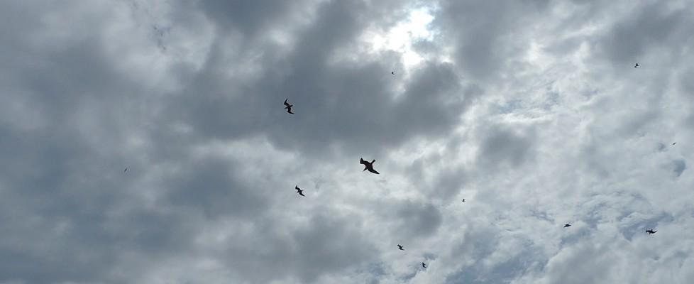 Quegli uccelli contro la lanterna ad annunciare lo Scirocco