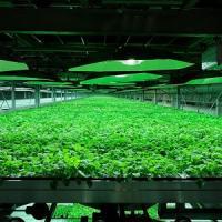 Si volerà grazie al tabacco: Boeing e SAA al lavoro su nuovo biocarburante