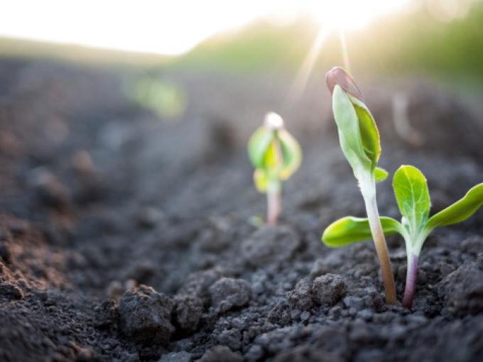 """Agricoltura bio, il caso dei fertilizzanti con """"matrina"""". L'azienda produttrice si difende"""