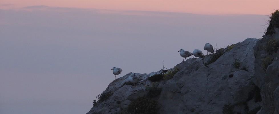 Quegli uccelli ormai padroni dell'isola, dove sbarcano folli e sognatori