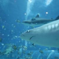 Tripadvisor, l'acquario di Genova è il migliore d'Italia. In Europa vince Lisbona