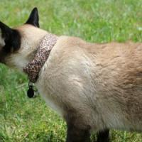 Il mio gatto è un hacker: Coco a caccia di wifi infiltrabili con un collare hi-tech