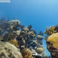 Viaggio nei santuari marini, le immagini su Google Maps