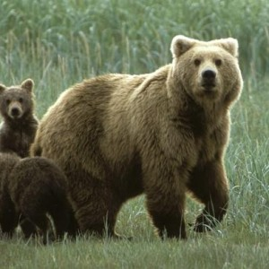 salviamo l orsa daniza e abbattiamo i genitori indegni
