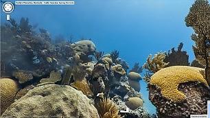 Google Maps sott'acqua   foto   fondali spettacolari a 360°