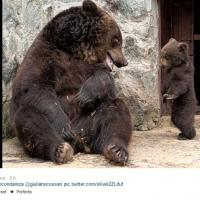 Il tam tam su Twitter: io sto con l'orsa
