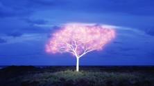 Tree of Life   la verità nascosta tra gli alberi