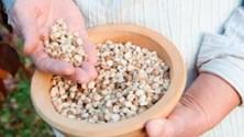 Vivere gluten free: ricette e curiosità