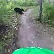 Il ciclista e l'orso l'incontro nel bosco