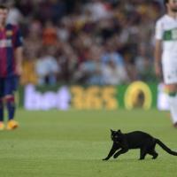 Barcellona, gatto nero in campo: si ferma la partita