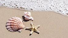 Sabbia, conchiglie  e acqua di mare: massaggi dell'estate  a cura di IRMA D'ARIA