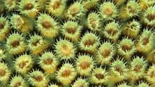 Armonie di corallo  nelle grandi foto per i desktop