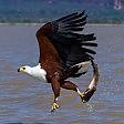 A rischio estinzione un uccello su otto