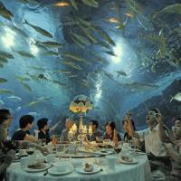 Cina, a cena nell'acquario