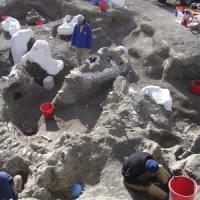 Ritrovato lo scheletro del più grande dinosauro mai esistito