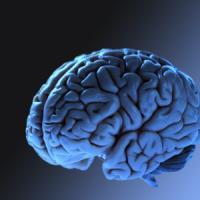 La mappa impossibile è quella del nostro cervello