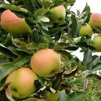 Acquisto di prodotti locali: così un italiano su tre combatte l'effetto serra