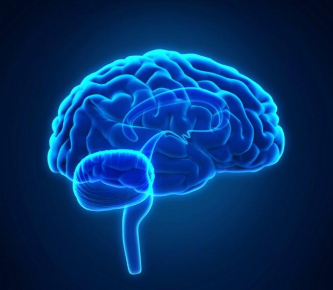 Sclerosi multipla, un farmaco frena la 'riduzione' del cervello
