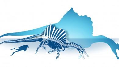 Ritrovato scheletro di Spinosaurus il dinosauro che sapeva nuotare   Foto