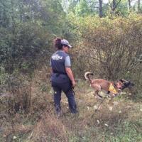 Orso trovato morto, l'unità antiveleno al lavoro