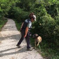 Orso morto in Abruzzo, unità antiveleno in azione