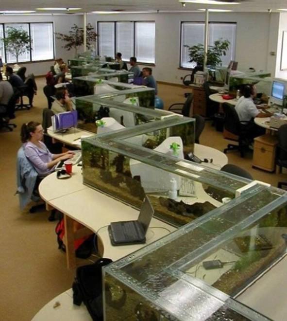 Privacy in ufficio, 10 idee per dividere gli spazi - Repubblica.it